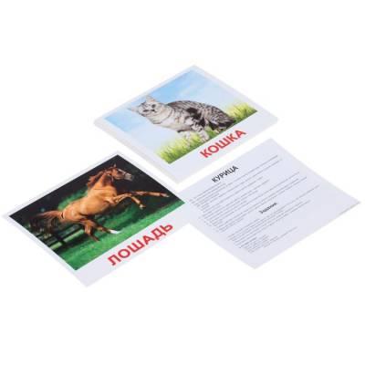 Обучающие карточки «Домашние животные» Вундеркинд с пеленок