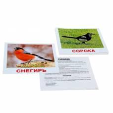 Обучающие карточки «Птицы» Вундеркинд с пеленок