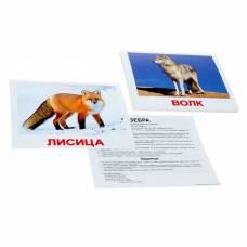 Обучающие карточки «Дикие животные» Вундеркинд с пеленок