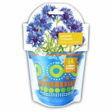 Василек луговой Happy Plant