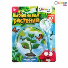 Набор для опытов «Выращиваем растение»: лупа, семена, тарелка, губка Эврики